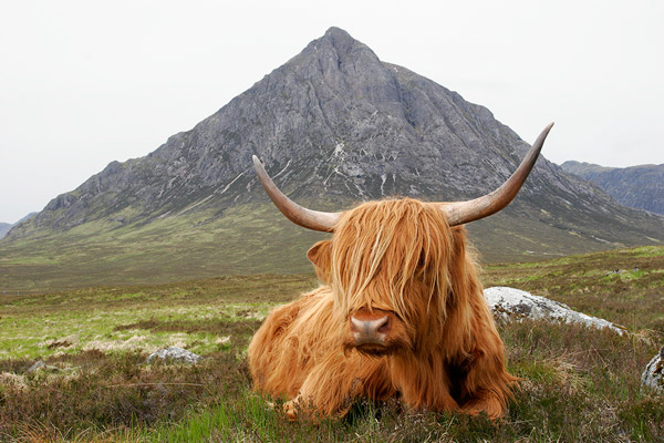 The Guardian of Glen Coe